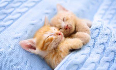 Aludj jobban és megváltozik az életed!