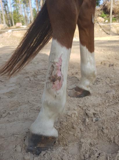 Angel lába a sérülés után 8 hónappal